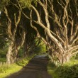 Dark Hedges, County Antrim — Stock Photo #52877327