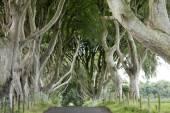Dark Hedges, County Antrim — Stock Photo