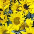 Close-up of Sunflowers — Stock Photo #60593411