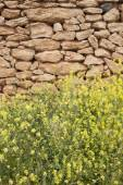 フォル メンテラ島の黄色の草と石壁 — ストック写真