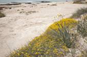 Valencians Beach, Formentera — Zdjęcie stockowe