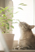 Cat relaxing at home — Stock Photo