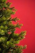 Grön julgran — Stockfoto