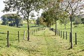 Rural country road through fields — Foto de Stock