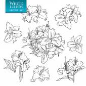 Outline drawings of white lilies — Stock Vector