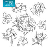 Outline drawings of white lilies — Vetor de Stock