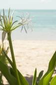 Exotic flower on beach — Stock Photo
