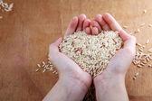 Ruka držící rýže — Stock fotografie