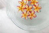 Frangipani flowers in the glass bowl — Stock Photo