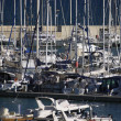 Постер, плакат: Luxury yachts in the marina