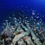 Wreck diving, sunken world war II submarine and a school of Anthias — Stock Photo #57533509