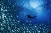 Aquaculture nets off the coast of the island — Foto Stock