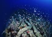 Wreck diving, sunken world war II submarine and a school of Anthias — Stock Photo