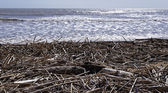 Boles and canes carried on the beach — Stock Photo