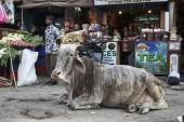 Cow at the Uttar Pradesh market — Stock Photo