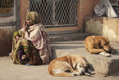 Indian woman and dogs at the Uttar Pradesh market — Stock Photo