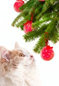 Christmas cat among a fur-tree — ストック写真