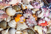 Starfish and seashells souvenirs — Stock Photo
