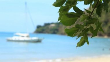 Tropischen strand mit bäumen — Stockvideo