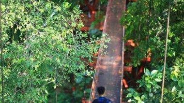 Birdwatcher walking on treetop canopy footbridge — Stock Video