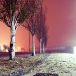 City street at night. — Stock Photo #72836899