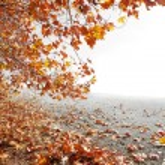 Autumn scenery and copyspace — Stock Photo #72836995