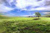 Green fields and tree landscape. — Stock Photo
