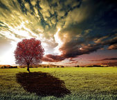 Tree and sunset  landscape — Stock Photo