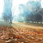 Autumn scenery — Stock Photo #73365959