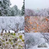 Winter mood — Stock Photo