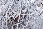 Humor de invierno — Foto de Stock
