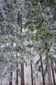 Winter mood — Stockfoto