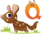 Zvířecí abeceda pro děti: Q za Quoll — Stock vektor