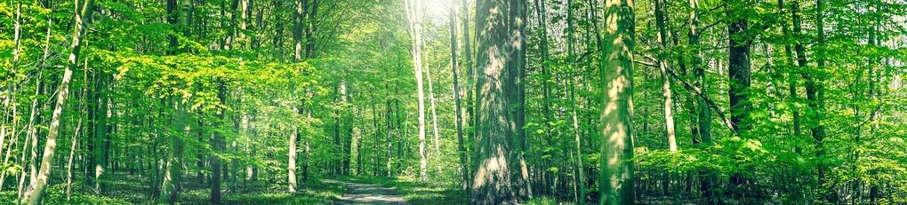 Фотообои Forest trail in a green panorama landscape