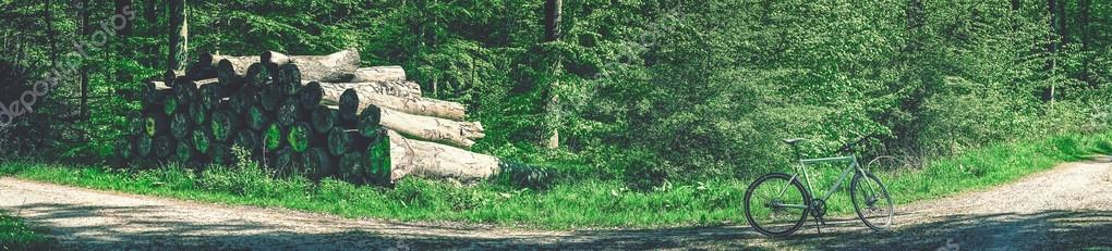 Фотообои Велосипед в зеленый лес