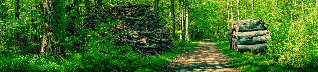 Фотообои Lumber by a road in a green forest