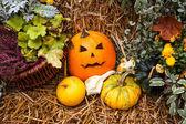 Halloween decoration with pumpkins — Stock Photo