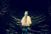 Pelican on a river — Fotografia Stock