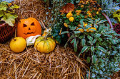 Halloween pumpkin decoration at autumn — Stock Photo