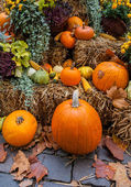 Autumn ornament with pumkins — Stock Photo