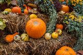 Pumpkin ornament at autumn — Stock Photo