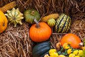Pumpkin decoration at autumn — Stock Photo