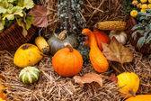 Autumn pumpkin decoration in beautiful colors — Stock Photo