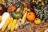 Autumn ornament with pumkins and corn — Stock Photo