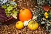 Pumpkin ornament in the fall — Stock Photo