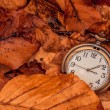 Clock in autumn leaves — Stock Photo #67818821