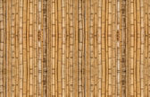 Bamboo background in vertical alignment — Stock Photo