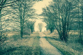 Nature path with trees — Stock Photo
