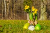 Easter time with eggs and daffodils — Fotografia Stock