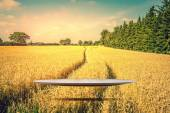 Stage hovering over a golden field — Стоковое фото